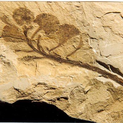 Museo Paleontologico L. Sorbini